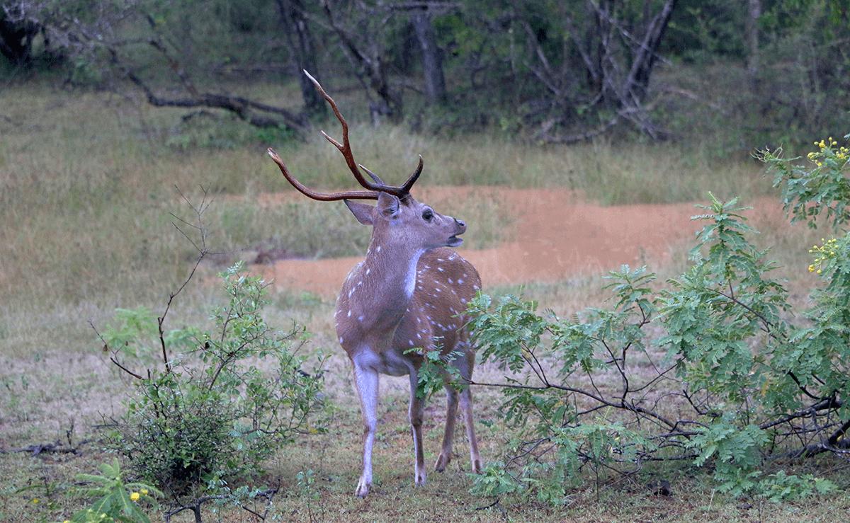 Sri Lanka travel wildlife