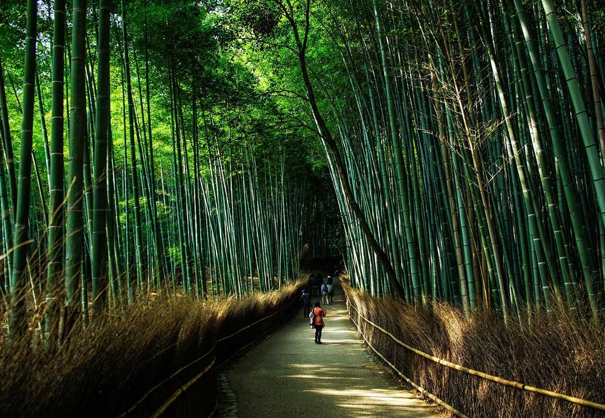 Things to do in Kyoto - Arashiyama bamboo groves