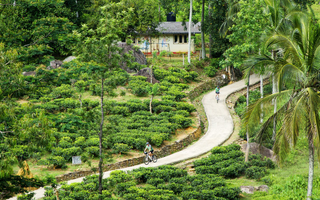 Tea country cycling - Sri Lanka Tour