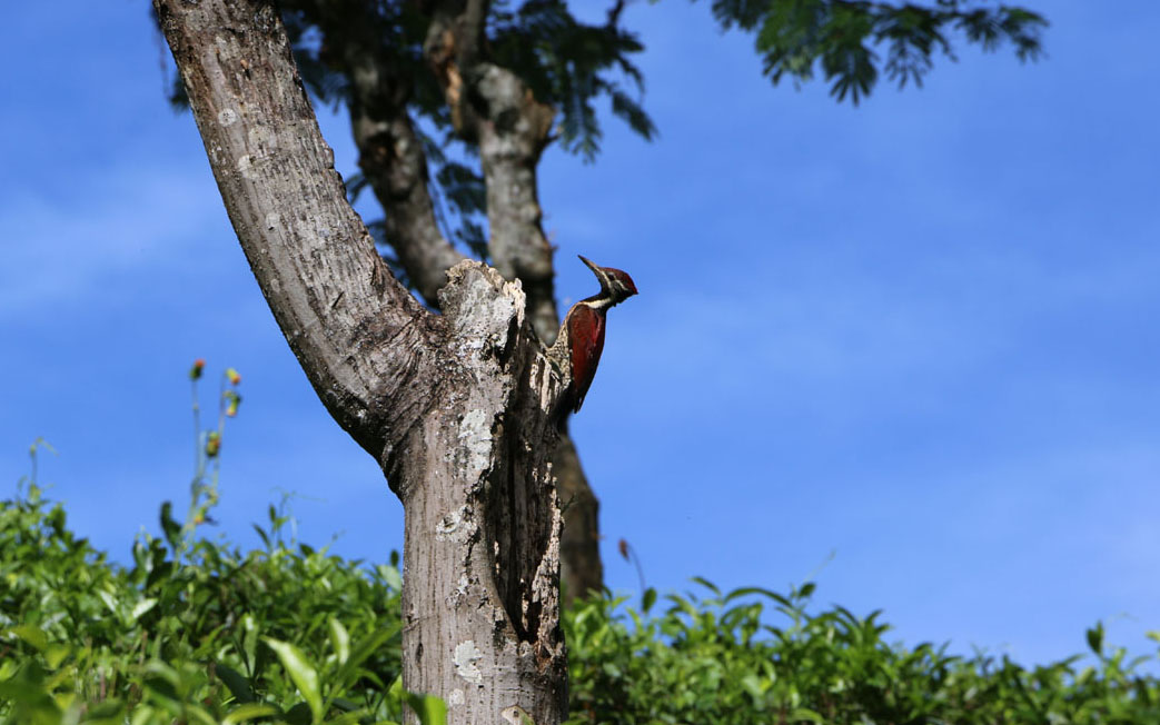 Bird spotting in Sri Lanka - Wildlife Tour